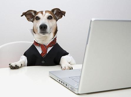 CEO_Dog