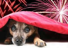 dog-fears-fireworks-fireworks-dogs-pet-expert-Steve-Dale-adaptil-anxitane-thundershirt-Vicotira-Stilwell