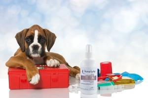 A_Puppy-First-Aid