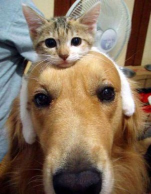the-world_s-top-10-best-images-of-cats-riding-dogs-10