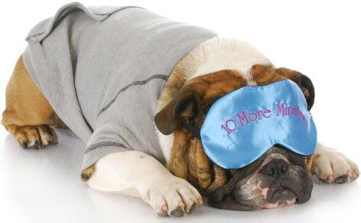 sleeping-dogs_645x400