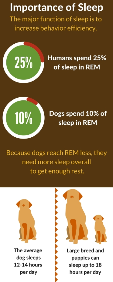 The average dog sleeps 12-14 hours per day