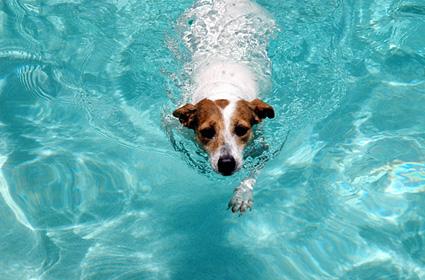 51-dog-swimming-pool-DT-425km071411