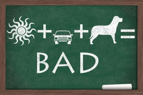 dog-hot-car-_Karen_Roach_large