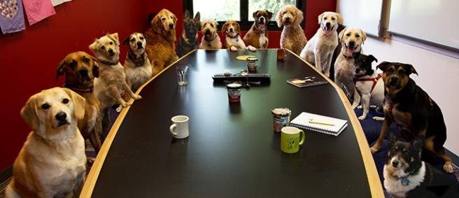 DogBoardMeetingHeader2