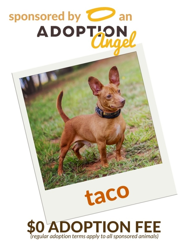 adoption angel animals taco
