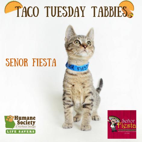 Taco Tuesday Tabbies-7